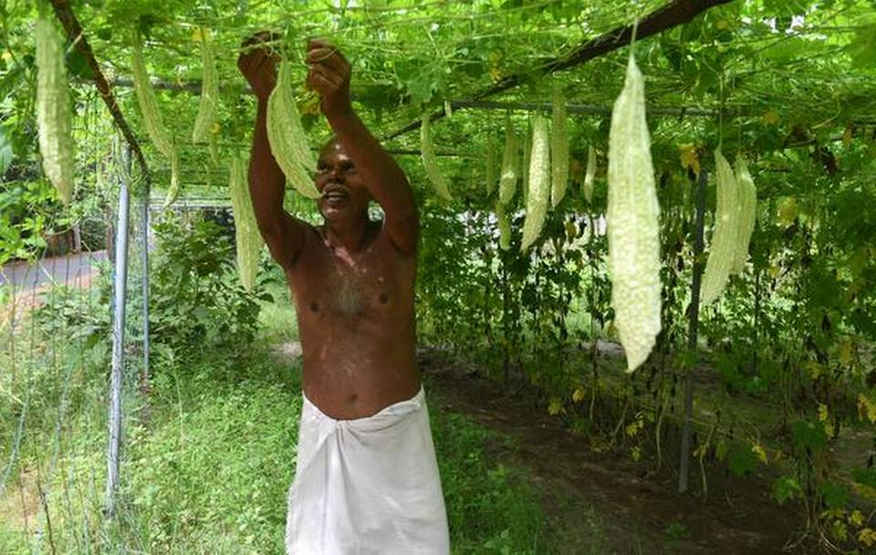 How Kanjikuzhi became Kerala's first chemical-free, vegetable-sufficient panchayat