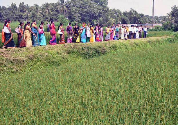 Machines help in renewing interest in paddy cultivation in DK