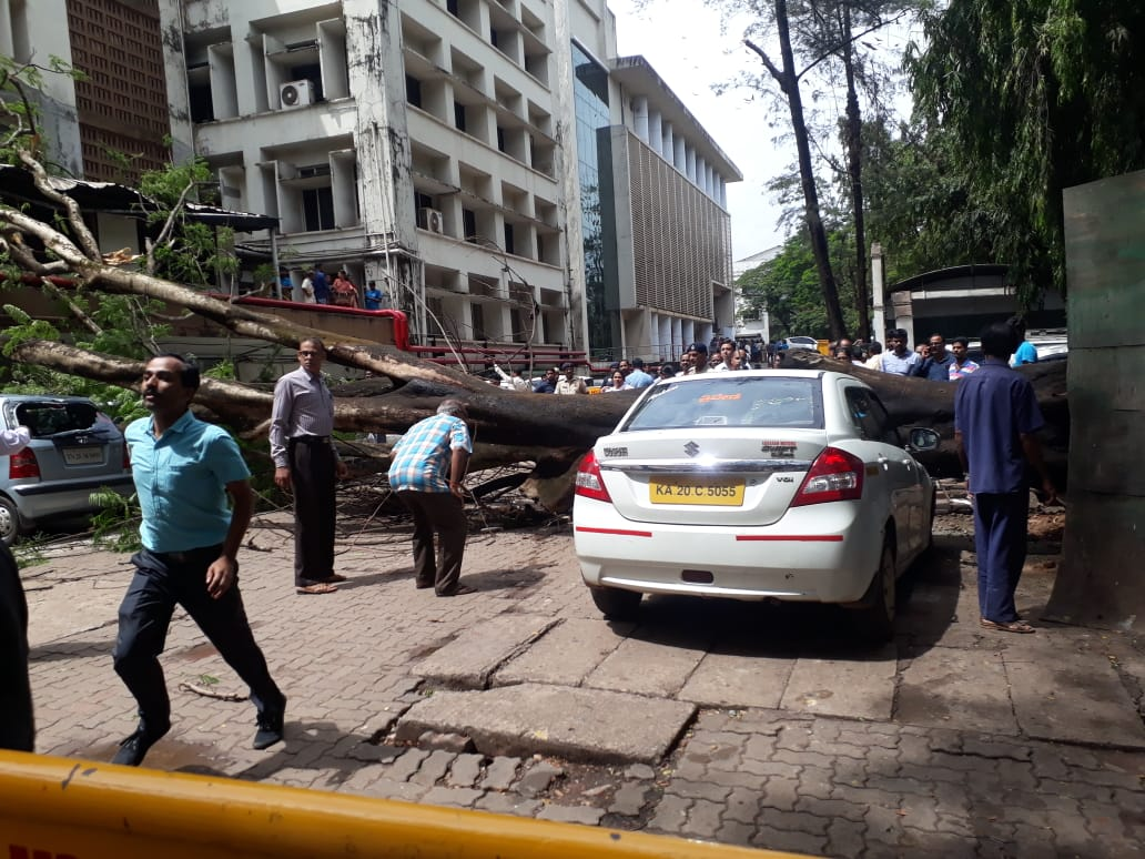 Huge tree falls in KMC hospital premises, two injured and four cars damaged