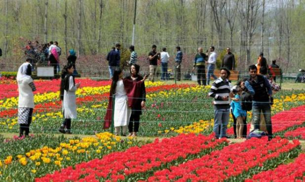 Asia's largest Tulip garden in Srinagar open to visitors