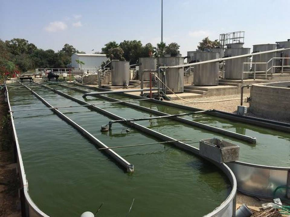 Israeli startup aims to save the planet from thirst using algae