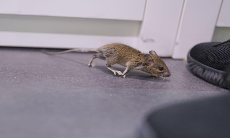 Arab man finds mouse in hotel room; his call to hotel staff for help has netizens in splits