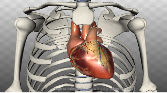 Scientists draw 3D image of heart