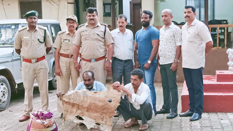 Two arrested for possession of blackbuck skin