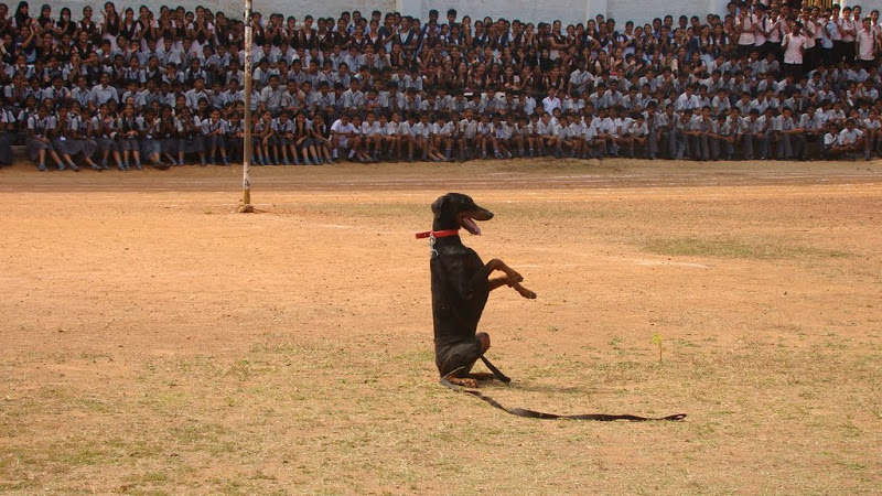 Udupi District Police Dogs' in action at Milagres Grounds