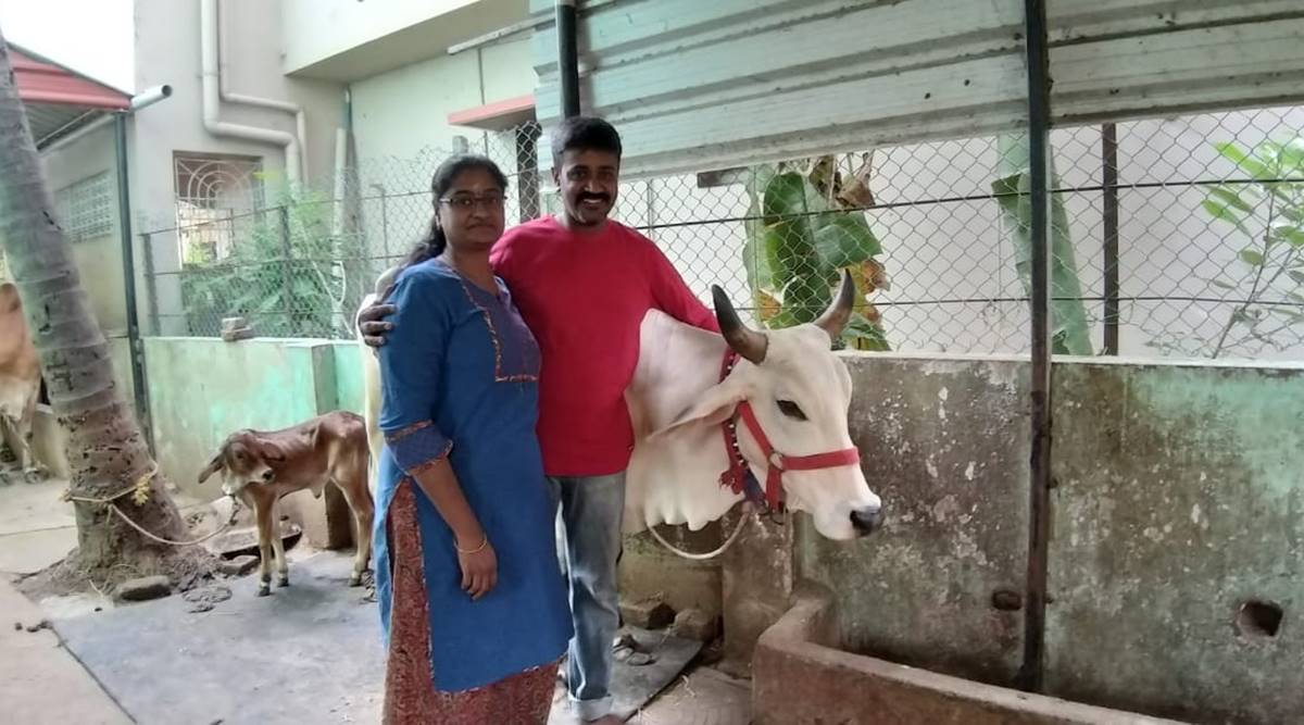 Meet an IT couple in Chennai running a dairy farm from their garage