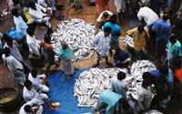 Modern fish market to come up in Udupi