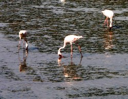 Flamingo Festival in Mumbai