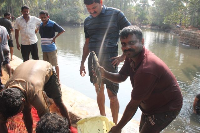 Traditional Fishing at Perla Pond  of Kemmannu.