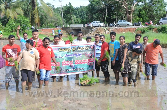 Rotary Shankerpura sponsored Rotaract Club of Subhasnagara Plants Paddy Sapling for a Noble Cause.