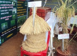 Agricultural Fair at Brahmavar attracts large crowd.