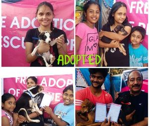 A FREE ADOPTION CAMP FOR RESCUED PUPPIES