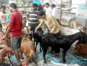 Mangalore: Jamath Council appeals for a fearless Bakrid