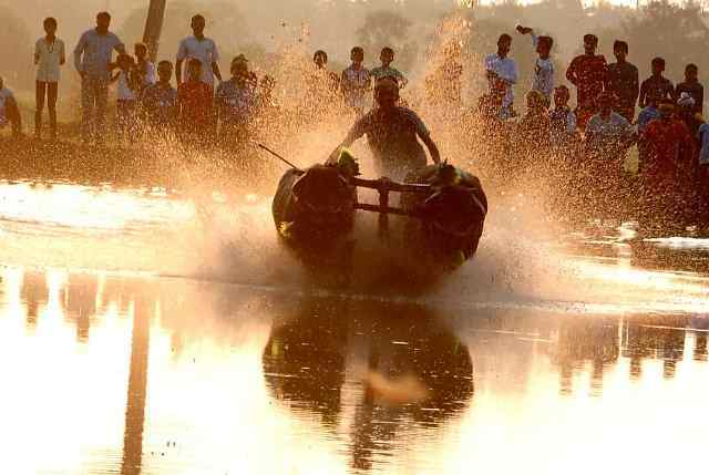 The historic Thonse Padumane (Kemmannu) Kambala held.