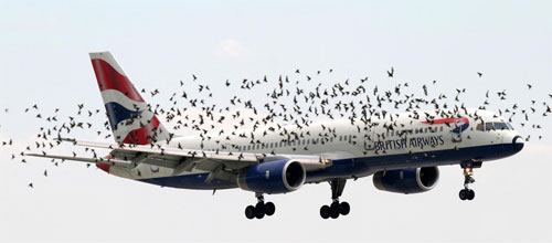 New device to scare birds away from planes