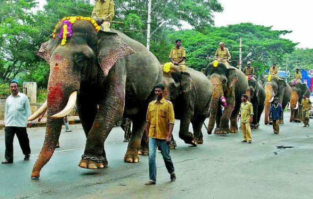 Dasara elephants to reach Mysuru today