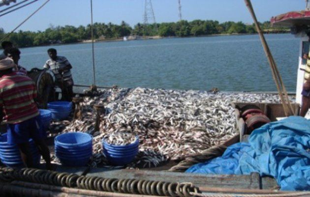 Non-availability of fish: Prices rise!
