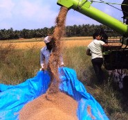 Harvesting Machine Makes Its Debut in Kemmannu.