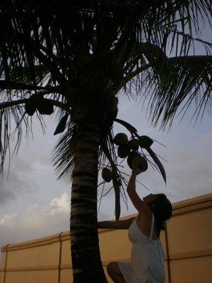 Student steals coconuts to help paint school building