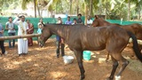 Horse riding school inaugurate​d