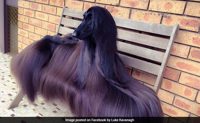 Stylish Australian Dog Becomes Internet Sensation