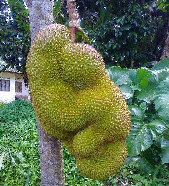 Kemmannu com | Jacaas chakka!!